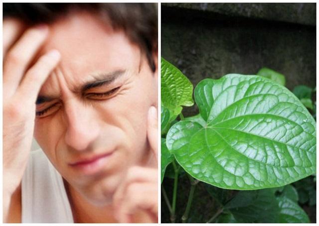 Trong lá trầu không có chứa hoạt chất kháng viêm, kháng khuẩn giúp loại bỏ cơn đau do sâu răng